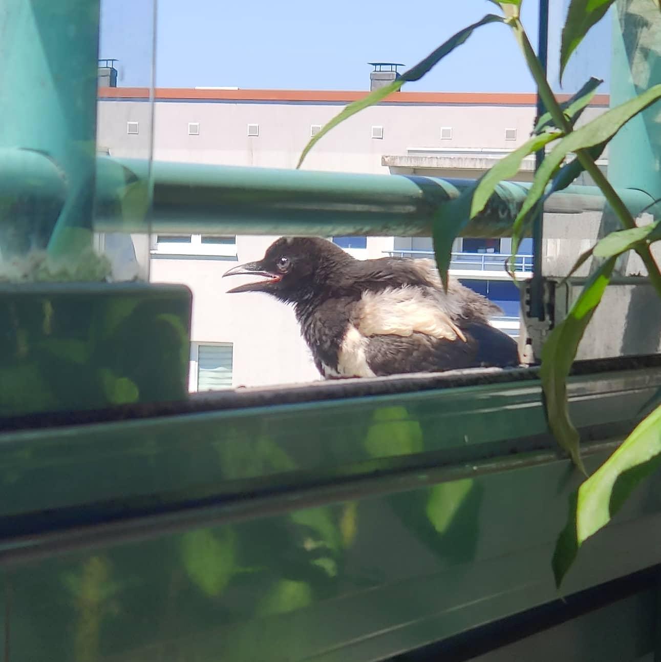 #instagram: Etwas Wasser im Balkonkasten und man macht sich Freunde