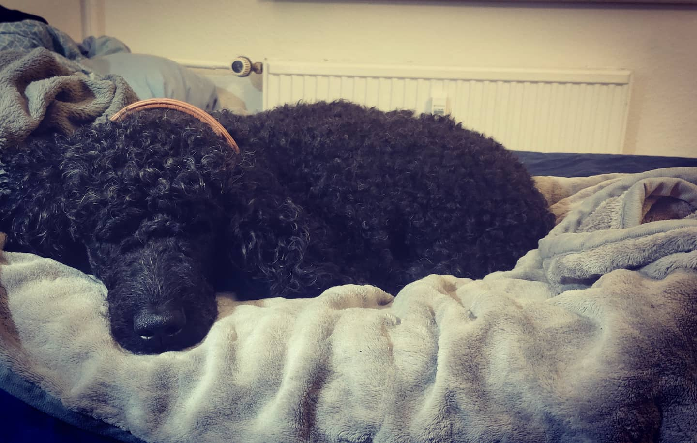 #instagram: Nelly findet das total gut, dass ihr Bett in meinem steht